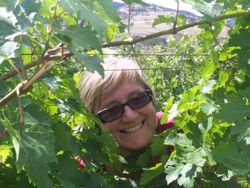 That's me between the vines