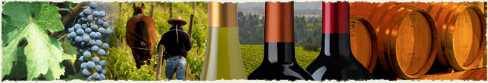 Picture courtesy The Wines of Chile