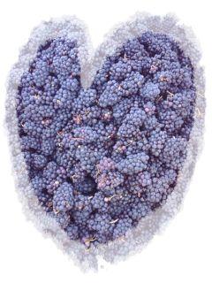 Township 7 Langley Pinot Noir Harvest 2009