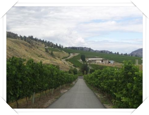 Hester Creek-driving between the vines from villa to winery