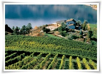 A view of Penticton wine country, courtesy of the BC Wine Institute